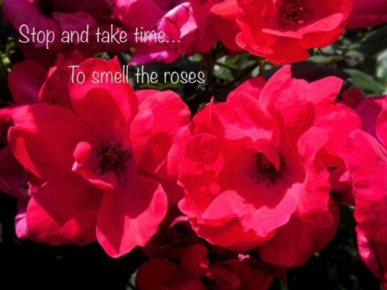 Take time to smell the roses copy