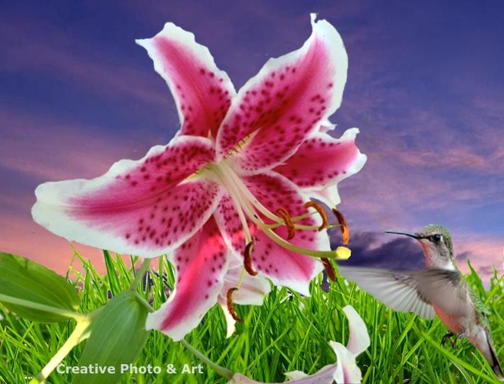 stargazer-lily-humming-bird-CPA