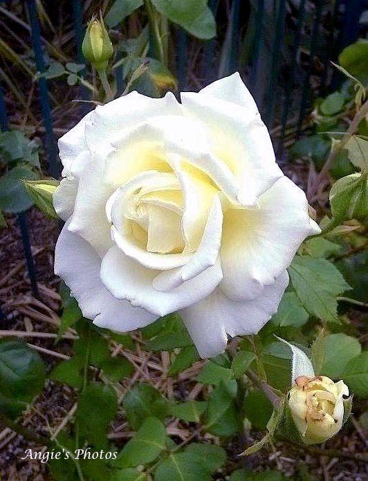 rosewhitekeep